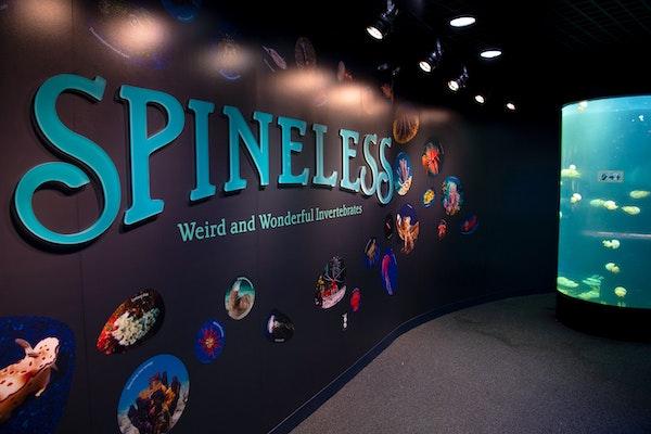 Photo of Spineless