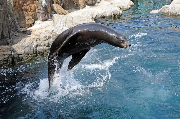 Photo of California Sea Lion