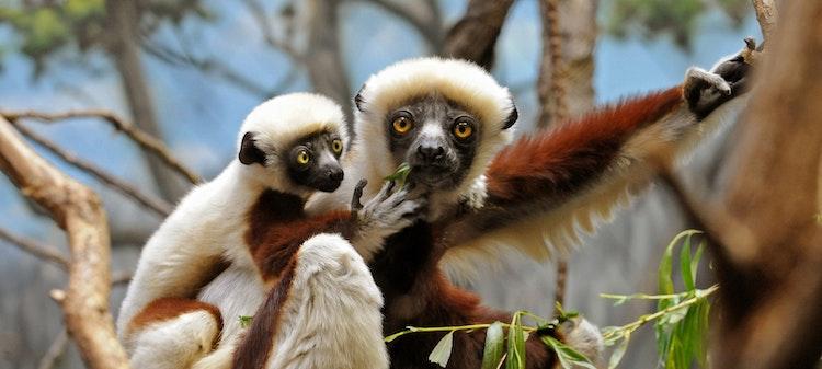 Photo of Madagascar!
