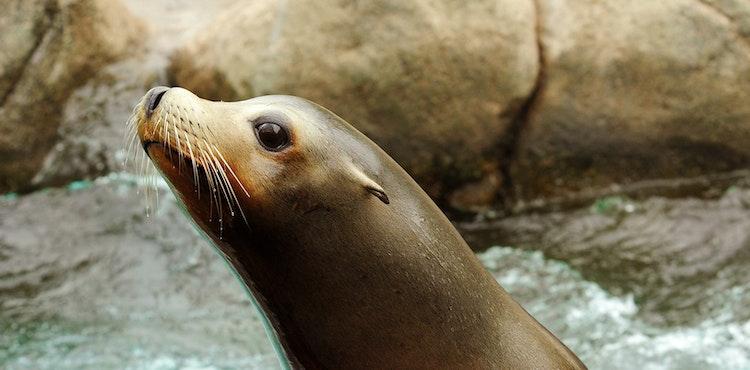 Photo of Sea Lion Pool