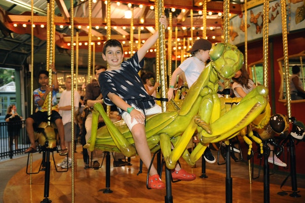 Photo of Bug Carousel