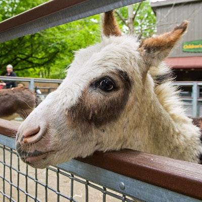 Photo of Donkey