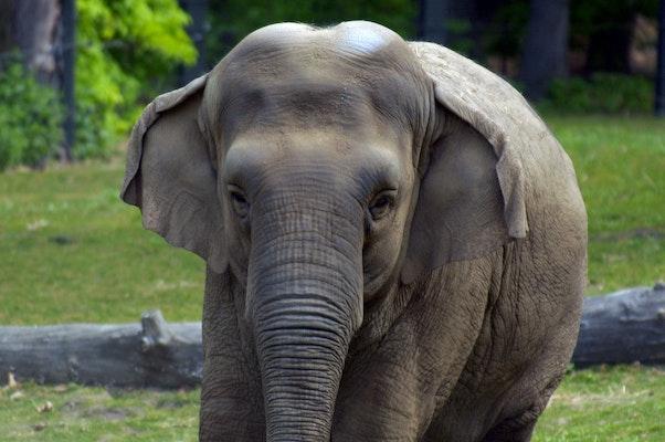 Photo of Elephant