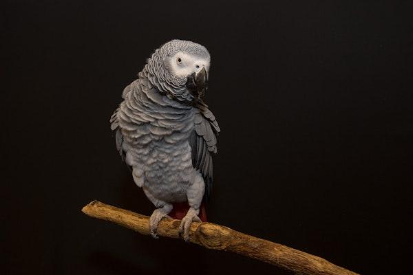 Photo of Parrots