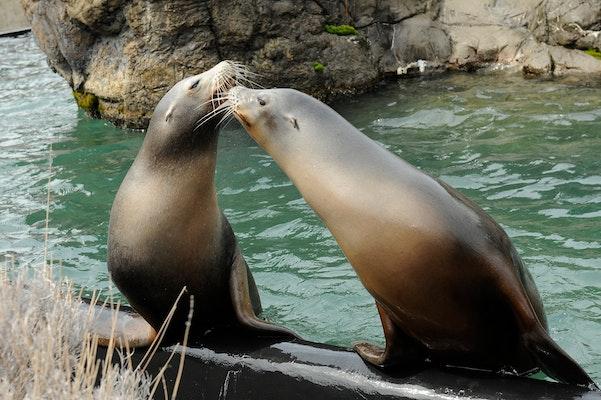 Photo of Sea Lion